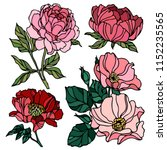 Stock vector pion and rose drawing flowers hand drawn wild rose isolated botanical drawings colorful flowers 1152235565