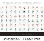 botanical vector design... | Shutterstock .eps vector #1152244985
