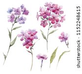 watercolor floral set of... | Shutterstock . vector #1152248615
