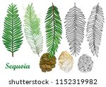 vector set with outline sequoia ... | Shutterstock .eps vector #1152319982