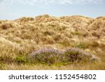 spring wildflowers at foot of... | Shutterstock . vector #1152454802