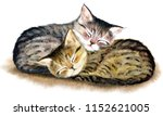Two  Ute Sleeping Tabby Kitten...