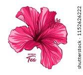 hawaiian hibiscus fragrance... | Shutterstock .eps vector #1152626222