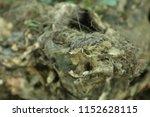 old wooden stump  snag  close... | Shutterstock . vector #1152628115