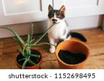 kitty with innocent eyes... | Shutterstock . vector #1152698495