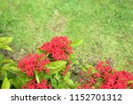 colorful flowers in the garden... | Shutterstock . vector #1152701312