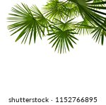 tropical leaves palm tree  ... | Shutterstock . vector #1152766895