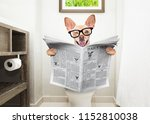 chihuahua dog  sitting on a... | Shutterstock . vector #1152810038
