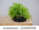 green fern leaves in the vase... | Shutterstock . vector #1152850598