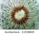 head of a dandelion | Shutterstock . vector #11528845