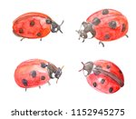 Collection Of Funny Ladybugs....