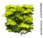 bright green lush tropical bush ... | Shutterstock .eps vector #1152994088
