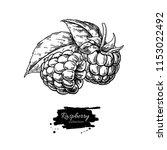 raspberry vector drawing.... | Shutterstock .eps vector #1153022492