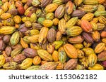 cacao pods in sao tome and... | Shutterstock . vector #1153062182