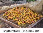 cacao pods in sao tome and... | Shutterstock . vector #1153062185
