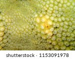 close up of stony coral... | Shutterstock . vector #1153091978