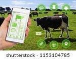 agritech concept showing a herd ... | Shutterstock . vector #1153104785