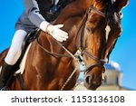 caring equestrian. caring... | Shutterstock . vector #1153136108