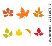 autumn leaves set  isolated on... | Shutterstock .eps vector #1153187842
