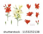 Set Of Lily Flowers In Color....