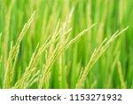 beautiful view of rural green... | Shutterstock . vector #1153271932