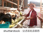 adha greeting kurban sheep.... | Shutterstock . vector #1153313305