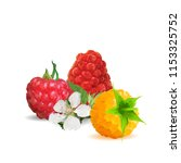 fresh  nutritious and tasty... | Shutterstock .eps vector #1153325752