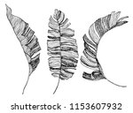 banana leaves illustration.... | Shutterstock .eps vector #1153607932