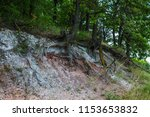 tree roots on the slope | Shutterstock . vector #1153653832