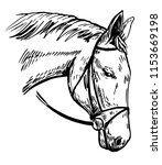 Stock vector horse s head hand drawn illustration converted to vector 1153669198