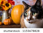 Close Up Of Calico Cat With...