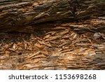rotten wood background | Shutterstock . vector #1153698268