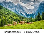 Green Meadow In Mountains And...