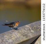 a dainty delightful  little... | Shutterstock . vector #1153776112