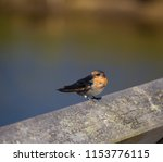 a dainty delightful  little... | Shutterstock . vector #1153776115