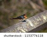 a dainty delightful  little... | Shutterstock . vector #1153776118