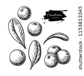 cranberry vector drawing.... | Shutterstock .eps vector #1153813345