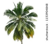 the coconut palm leaves... | Shutterstock . vector #1153904848