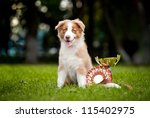 Little Puppy And His Award Cup...