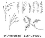 black line grass and twigs on... | Shutterstock .eps vector #1154054092
