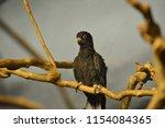 funny cute bird | Shutterstock . vector #1154084365