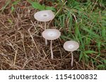 mushrooms are growing on grass... | Shutterstock . vector #1154100832
