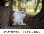 white cat with red spots sits... | Shutterstock . vector #1154171038