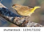 palm warbler perched | Shutterstock . vector #1154172232