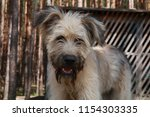cute shaggy dog looks into the... | Shutterstock . vector #1154303335