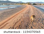 dogs at the beach in dahab ...   Shutterstock . vector #1154370565