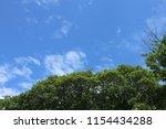 blue sky  clouds. treetops. | Shutterstock . vector #1154434288