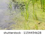 swamp with mud moss and algae ... | Shutterstock . vector #1154454628