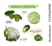 various cabbage set.  cabbage ... | Shutterstock .eps vector #1154466988