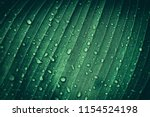 drop of water on tropical... | Shutterstock . vector #1154524198